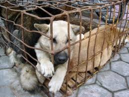 Nueva cátedra de Derecho Animal en la UBA: ¿avance o retroceso?