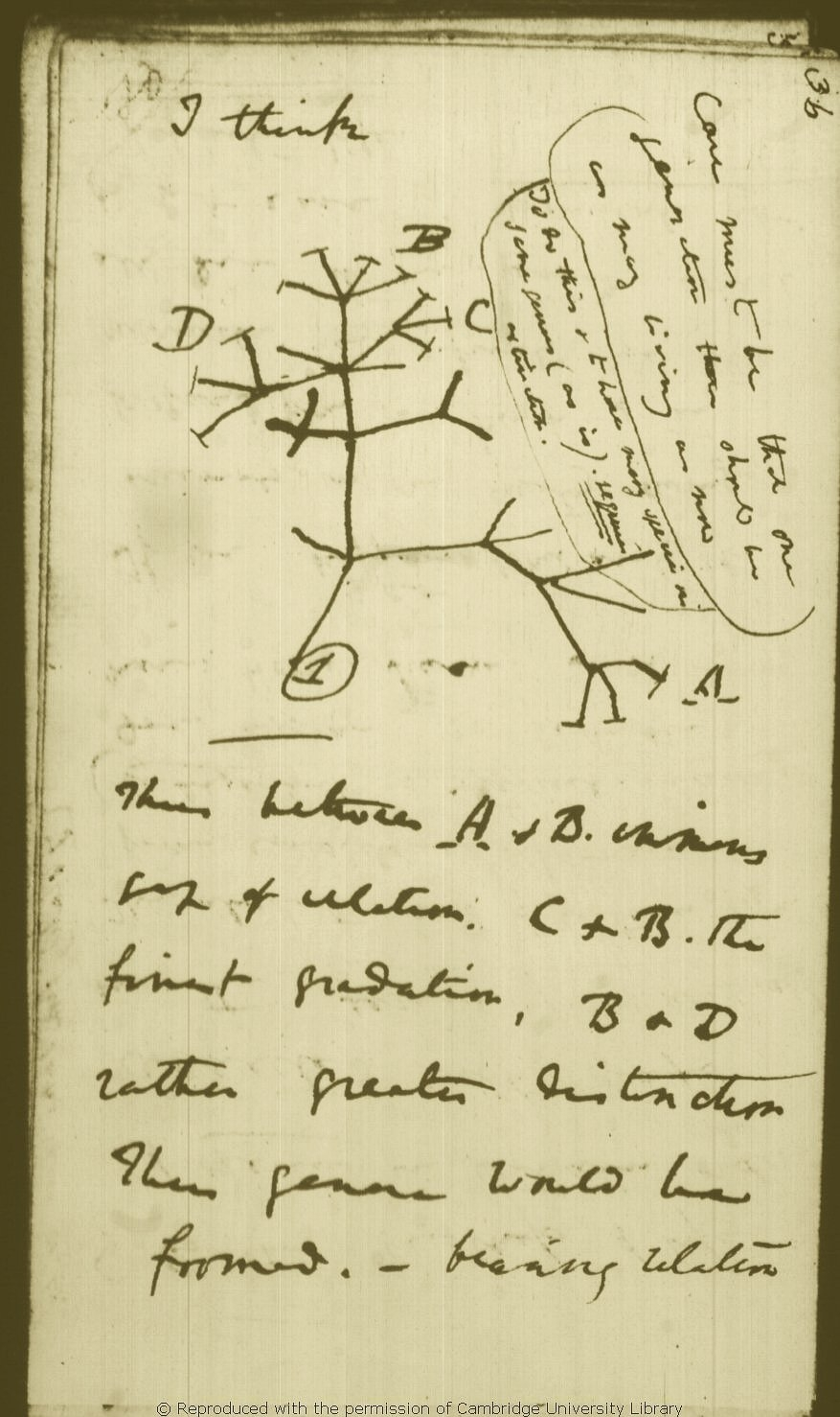 Personajes: Charles Darwin