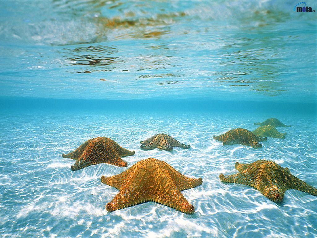 El mar a salvo